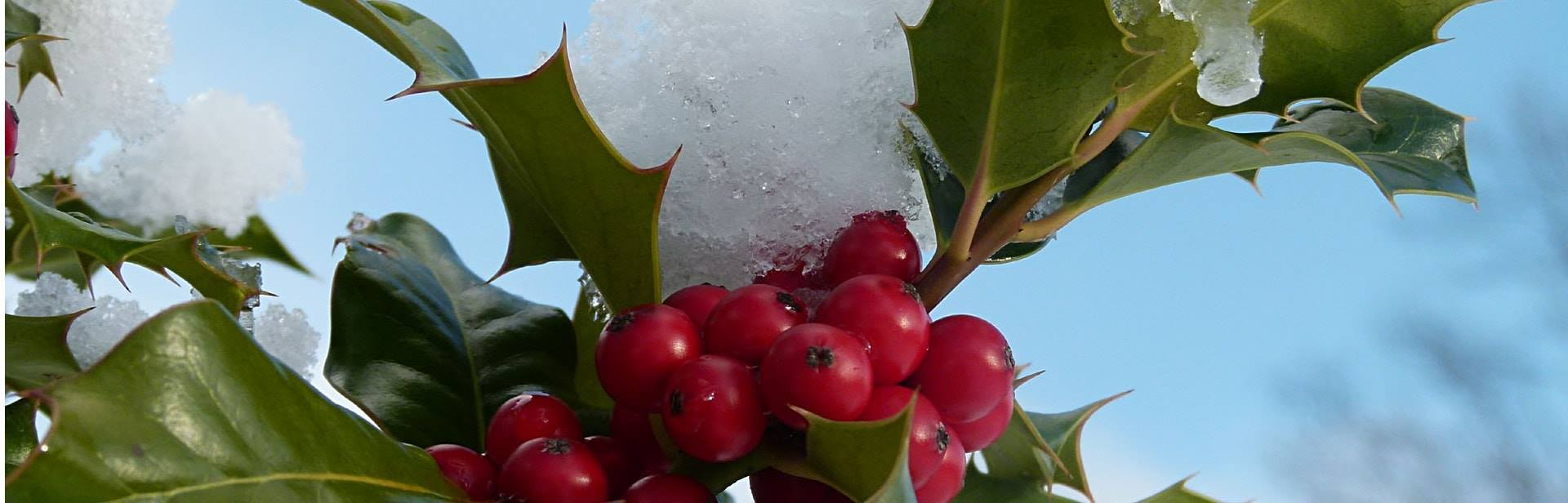 Conseils bulle de vert paysagiste caluire et cuire for Jardinier paysagiste lyon